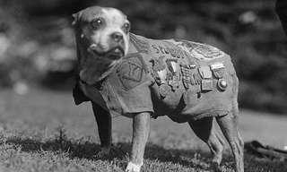הסמל סטאבי -איזה כלב!