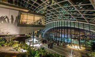 הכירו את הסקיי גארדן - הגן הבוטני הגבוה בלונדון