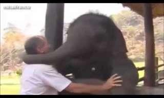 חיות בר מתחבקות עם בני אדם