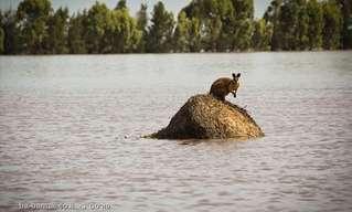תמונות מהשיטפון באוסטרליה