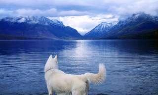 """הכלב שיצא לטיול ברחבי ארה""""ב"""