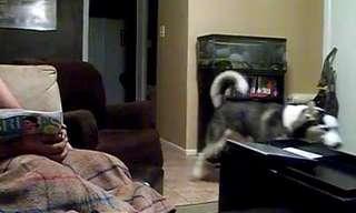 כלבים מפחדים מדברים מוזרים