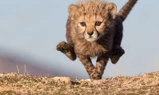 רגעי ילדות מקסימים ממלכת החיות