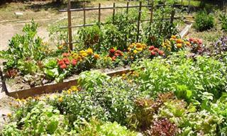 אילו צמחים הכי כדאי לכם לשתול בחורף?