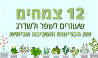 12 צמחים שעוזרים לשפר ולשדרג את הבריאות והסביבה הביתית