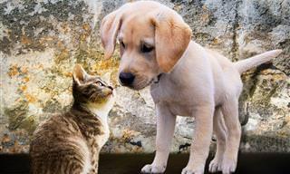 8 מיתוסים על כלבים וחתולים שחשוב לנפץ