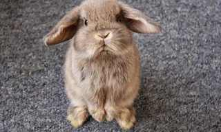 חיות פולניות - מצחיק!