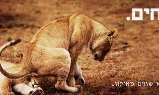 איך בעלי חיים דומים לבני אדם