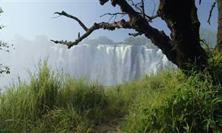 סרטון שמראה את כל היופי והייחודיות של זמביה
