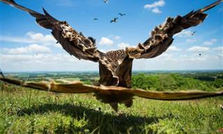 21 תמונות מדהימות מתחרות צילום הציפורים של הקרן הבריטית לצפרות