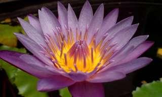 פרחים מדהימים וציטוטים מעוררי השראה
