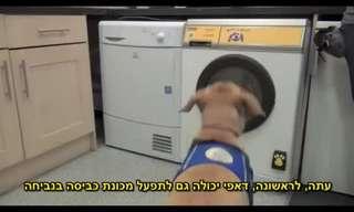 המצאה חדשה: מכונת כביסה לכלבים