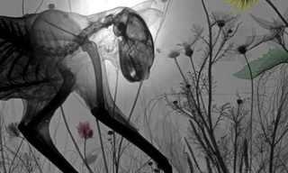 תיעוד נדיר של חיות תחת רנטגן