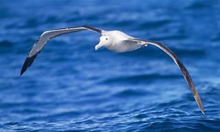 9 זני ציפורים מדהימים שמחזיקים בשיאים מרשימים במיוחד