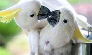 אהבה זה בטבע שלנו - מקסים!!!