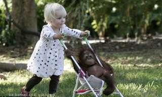 התאהבה בקוף - מתוק!