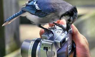 בעלי חיים בפוזות למצלמה - מצחיק!