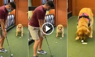 כלבה חמודה עוזרת לבעלים שלה לשחק גולף
