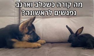הכלב הזה רק ניסה להתחבר עם ארנב – צפו בתוצאה הממיסה!
