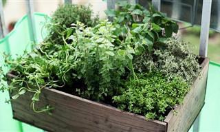8 צמחי תבלין אהובים ושימושיים שתוכלו לגדל בביתכם