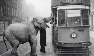 20 תמונות היסטוריות נדירות ומרתקות