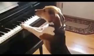 מנגן ושר..