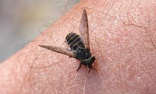 האביב בפתח: איך להמנע מעקיצות יתושים בדרכים טבעיות