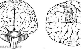על מוח ימין, מוח שמאל והיפנוזה