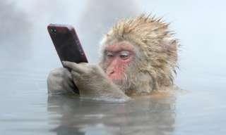 19 הוכחות לכך שמוצאו של האדם הוא מן הקוף