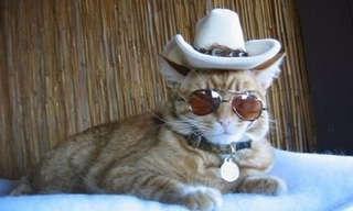 אם חתולים היו יכולים להחליף את בני הזוג...