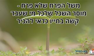 משל הפרח שלא פרח - מוסר השכל שלכל מי שעבד קשה בחייו כדאי להכיר