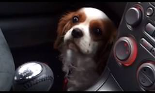 תגובה מתוקה ומעוררת רחמים של כלבה שלא רוצה ללכת לווטרינר