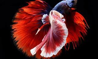 סדרת צילומי דגים שמוכיחה כי הם חיות אלגנטיות במיוחד