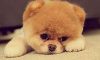 החיות הכי חמודות באינטרנט