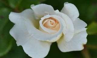 הורד הלבן - שיר מכל הלב!