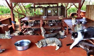 גן עדן לחתולים: בית מחסה מקסים ל-500 חתולים