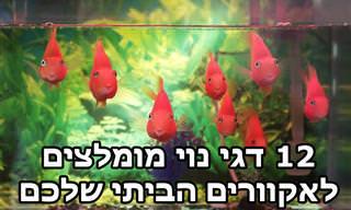 12 דגי נוי מומלצים לגידול באקווריום ביתי
