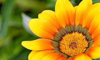 מצגת מקסימה על פרחים מגן החיים