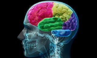 12 טיפים יעילים לשמירה על יכולות המוח לאורך שנים רבות