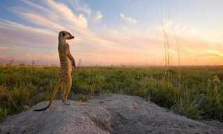 חיות הפרא של יבשת אפריקה