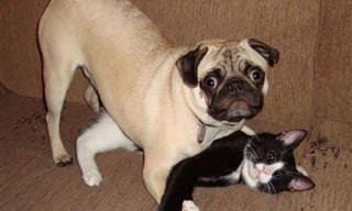חיות חמודות שנתפסו על חם