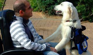 כלבי השירות של חולי מחלות ניוון שרירים