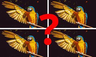 בחן את עצמך: האם תצליח למצוא את התמונה השונה בכל מקבץ?