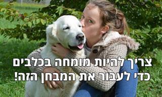 האם אתם מומחים להתנהגות ולמאפיינים של כלבים?