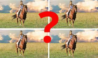 בחן <b>את</b> עצמך: האם תצליחו למצוא <b>את</b> התמונה יוצאת הדופן?
