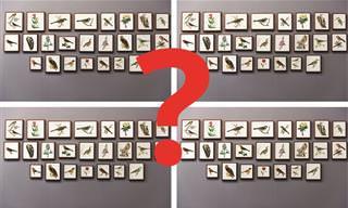 בחן <b>את</b> עצמך: האם תצליח למצוא <b>את</b> כל <b>ההבדלים</b> בתמונות הבאות?