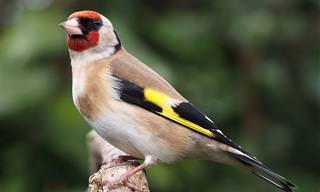 <b>בחן</b> <b>את</b> עצמך: האם תכיר <b>את</b> השמות של 16 הציפורים היפות האלו?