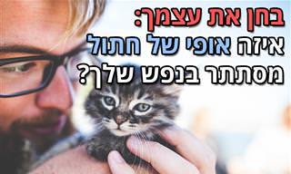 בחן את עצמך: <b>איזה</b> אופי של חתול מסתתר בתוך הנפש שלך?